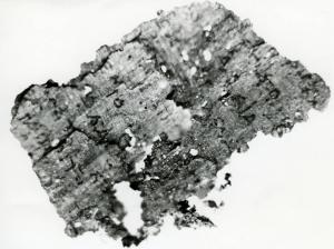"""Φωτογραφία του παπύρου από τον """"Τάφο του Ποιητή"""" © ΕΑΜ 1981"""