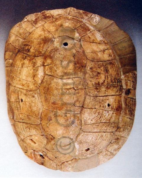 Εικ. 13. Ολυμπία, Αρχαιολογικό Μουσείο. Χέλυς Βασσών (Αραπογιάννη 2003:164).