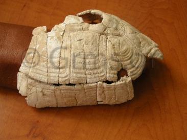 Εικ. 15. Paestum, Museo Archeologico Nazionale. Χέλυς Ποσειδωνίας Ι.