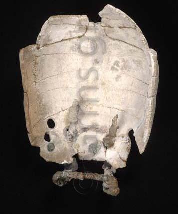 Εικ. 17β. Lecce, Museo Castromediano. Χέλυς Lecce IΙ: εσωτερική πλευρά (phot. D. Castaldo).