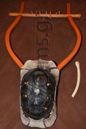 Εικ. 49. Με το δέρμα τεντωμένο και περιδεμένο στο κέλυφος: πίσω πλευρά.