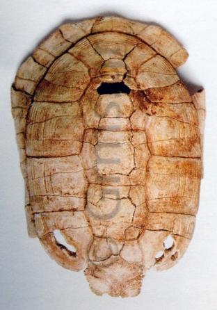 Εικ. 8. Άρτα, Αρχαιολογικό Μουσείο. Χέλυς Αμβρακίας Ι (Ζάχος 2003:165).