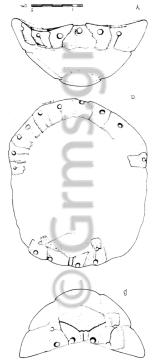Εικ. 9. Άρτα, Αρχαιολογικό Μουσείο. Χέλυς Άμβρακίας ΙΙ (σχέδιο).